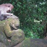 バリ島ウブド モンキー·フォレスト観光お役立ち情報&お猿対策